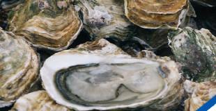 La sélection d'huîtres du MOF